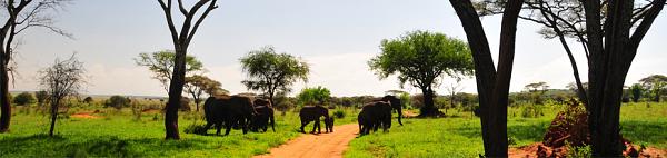 CIRCUIT TANZANIE - VOL + PENSION COMPLÈTE - Merveilles de Tanzanie en 4x4